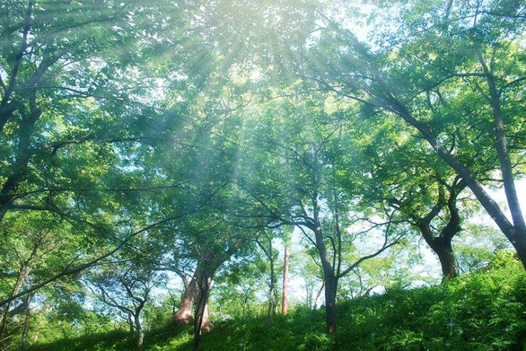 1x1.trans 初夏の「うっかり日焼け」にご注意ください!
